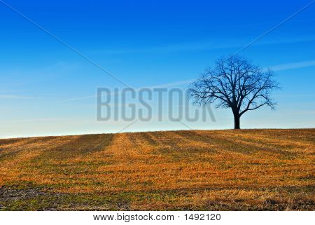 A Tree In A Farm Field