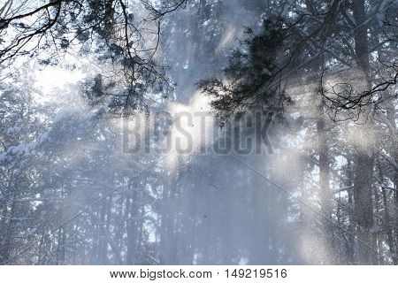 Snow in forest in sunny day in winter