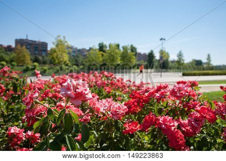 Flowers And Urban People Running