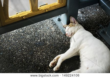 Cat Kitten Sleeping Footpath Roadside Animal Concept