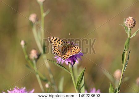 butterfly on a summer meadow full of flowers