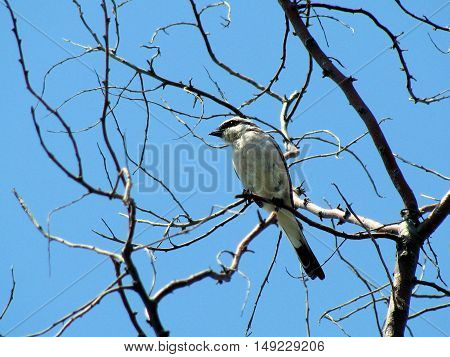 Photo of a sparrow sitting on a branch. Picture taken in the summer of 2009.