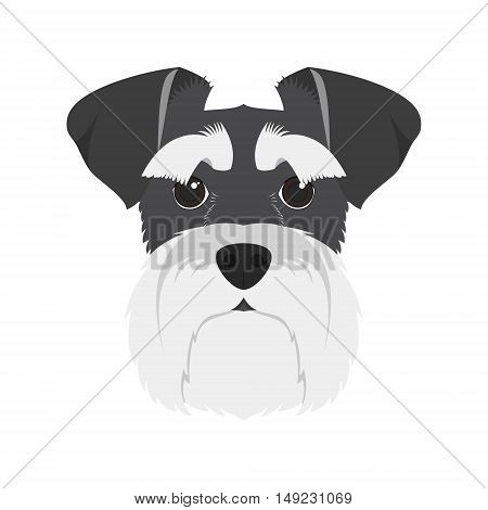 Schnauzer dog isolated on white background vector illustration