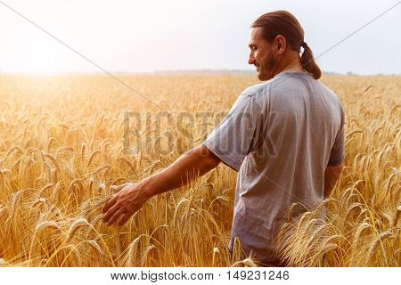 A man with his back to the viewer in a field of wheat touched by the hand of spikes in the sunset light.