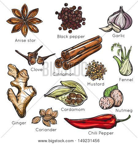 Indian spices herbs icon set colored and isolated with titles anise star black pepper garlic chili pepper vector illustration