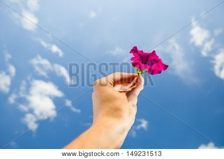 hand holding flower, sky background
