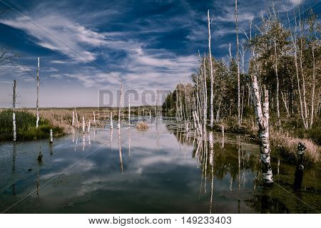 Foggy swamps in autumn. Cold melancholic landscape with water vapour. Mystery and mystic wetland with trees. Enigmatic mysterious dark swamp.