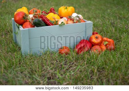 Wooden box with a crop of vegetables and harvest of root on the background of the grass. Fresh and organic food.