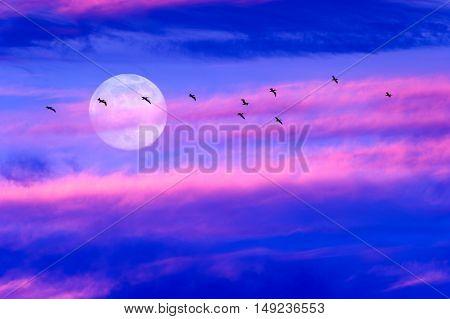 Moon Birds is a colorful surreal cloudscape with a flock of silhouetted birds flying by and a full moon rising in the sky.