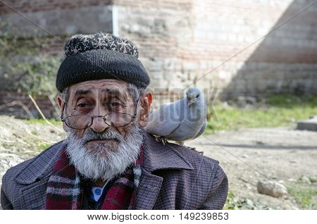 Istanbul, Turkey - January 25, 2015: White Bearded Grandfather and Pigeons friendly. Istanbul Topkapi bird markets bird seller grandfather was seen with pigeon on shoulder.