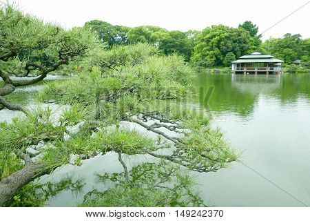 Pine Tree, Water Pond And Traditional Japanese House