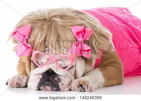 female english bulldog wearing pink dress and blonde wig on white background