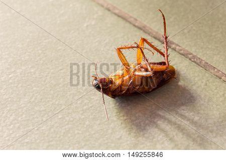Dead cockroaches on house floor . Healthy concept.