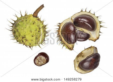 Chestnuts isolated on white background. Clipping path included.