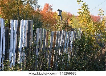 The nest for the birds in the sun with a wooden fence and greenery with red and yellow leaves around autumn nature and blue sky