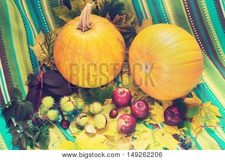 Autumn still life. Pumpkins apples and wild grapes among the fall leaf and chestnuts on the background of turquoise striped fabric. Toned image. Soft filter. Top view.