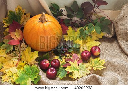 Autumn harvest. Pumpkin apple and wild grapes among the colorful fall leaf on the beige sackcloth fabric.