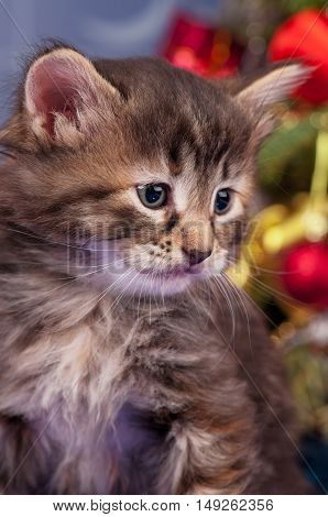 Cute fluffy kitten near Christmas spruce with gifts and toys close up
