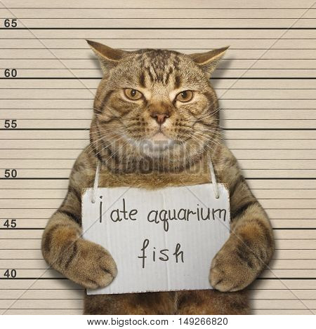 A big cat fished out of a aquarium. It was arrested for this.