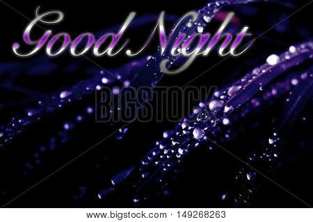 dew drops on grass purple gradients effect with word good night
