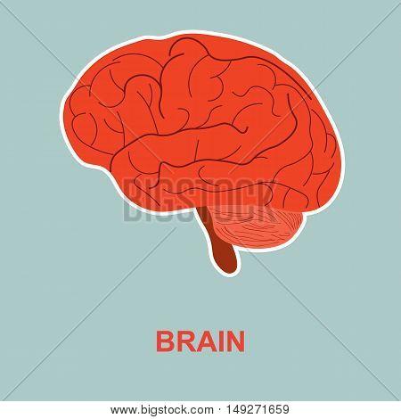 Internal human organ brain. Poster for medicine.
