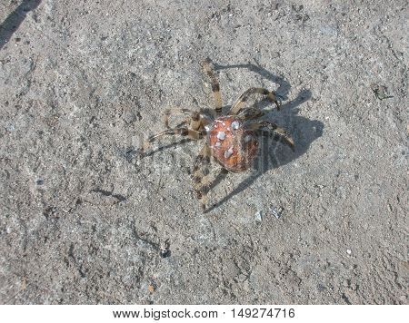 spider, earth, gray, brown, insect, poisonous, legs, nature