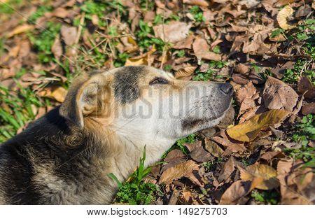 Stray dog's short relaxation under autumnal sun