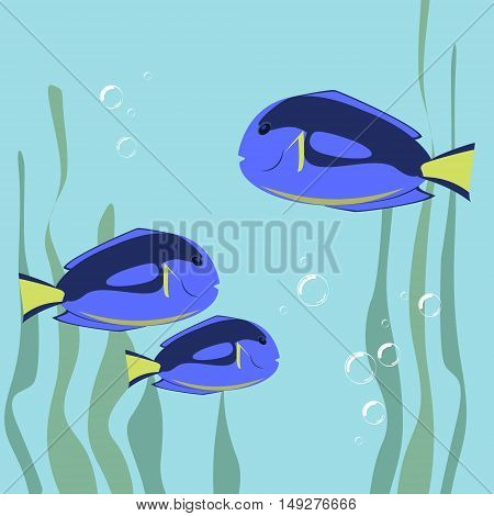 Marine fish color flat design. Sea and fish ocean fish animal drawing illustration marine life sea fish