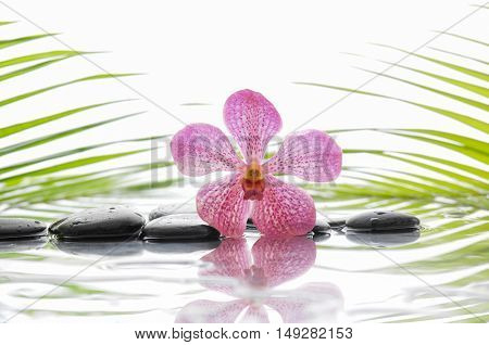 Still life with Macro of pink orchid and wet black stones with green leaf