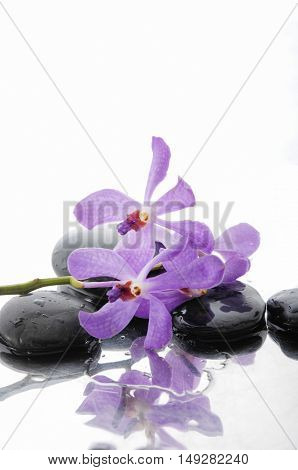 Still life with Macro of orchid and wet black stones