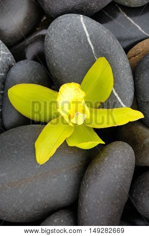 Beautiful yellow orchid and stones
