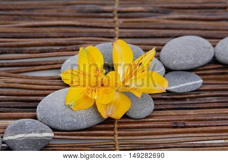 Yellow orchid with gray stones on mat