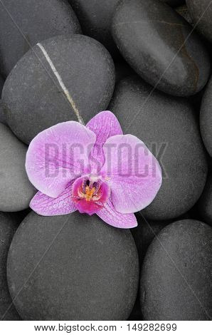 Beautiful orchid and stones