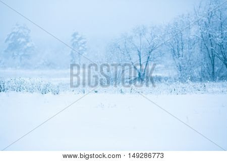 Winter snowy trees background