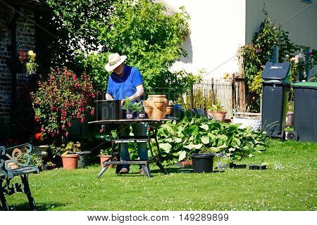 MILTON ABBAS, UNITED KINGDOM - JULY 19, 2016 - Local resident potting plants outside his cottage Milton Abbas Dorset England UK Western Europe, July 19, 2016.