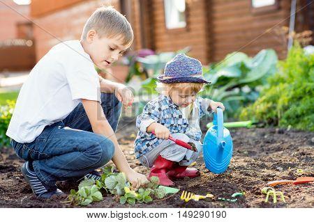 Children planting strawberry seedling in to fertile soil outside in garden