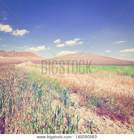 Wheat Fields on the Hills of Sicily Instagram Effect