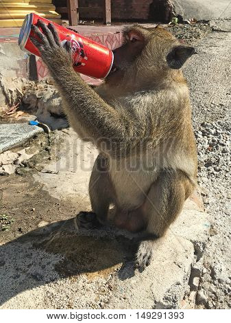 Monkey With Stolen Can Of Coca Cola