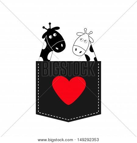 Cute cartoon black white giraffe in the pocket Boy girl and heart. Camelopard couple on date. Long neck. Funny character set. Happy family. Love greeting card. Flat design. Isolated. Vector