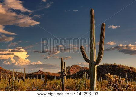 Sunset at Saguaro National Park near Tucson Arizona
