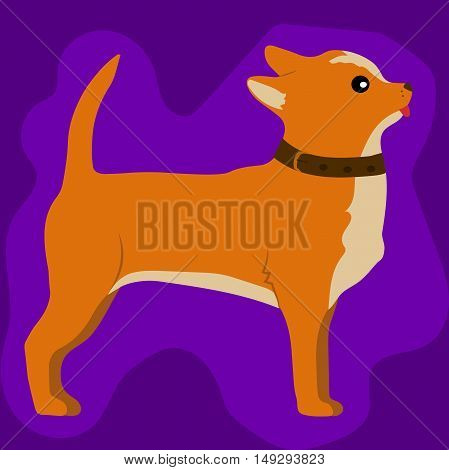 High quality original trend vector illustration of a cute little chihuahua dog