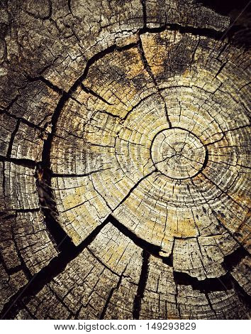 abstract background old wood with tree rings
