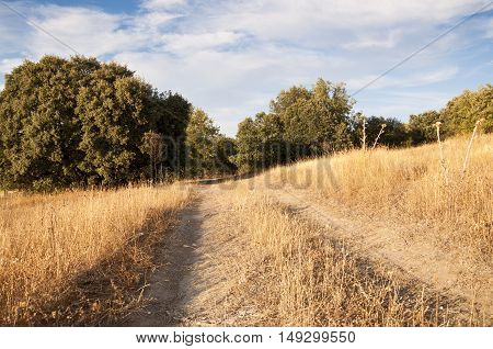 Country road at Holm Oak forest. Picture taken in Guadarrama Mountain Madrid Spain.