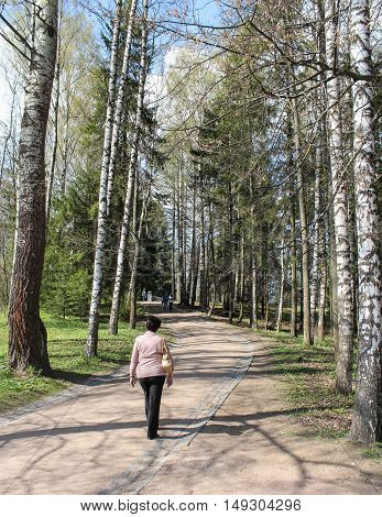 St. Petersburg, Russia - 3 May, Birch alley in spring,3 May, 2016. People and spring landscape in Pavlovsk park.