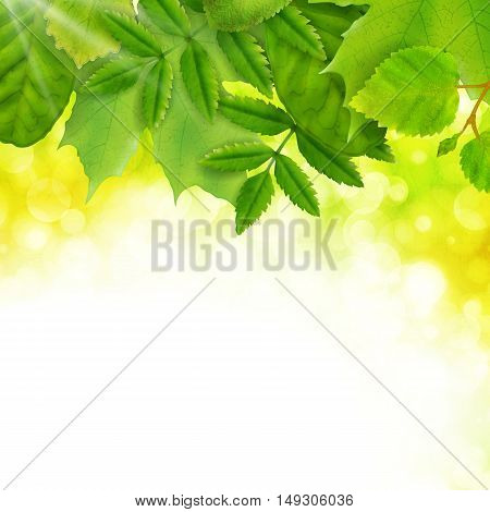 Summer background with fresh green leaves and sunshine, vector illustration
