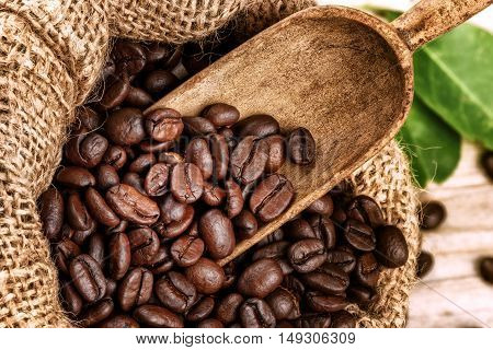 Roasted coffee beans in burlap sack with old wooden scoop. Closeup