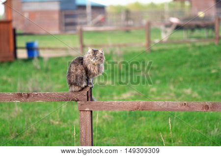 Cat sitting on old wooden fence
