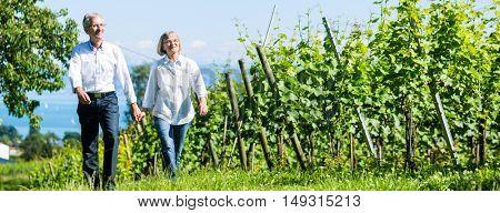 Senior couple, woman and man, having walk in vineyard