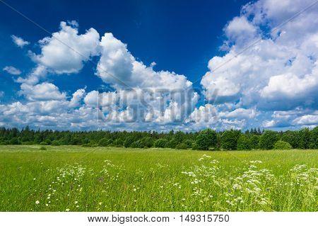 Grass Lawn Field Freedom