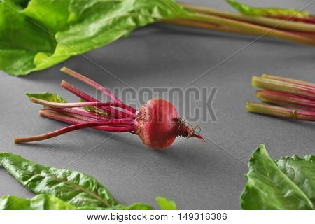 Young beet on grey background